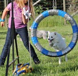 Dog Agility Classes June 2012