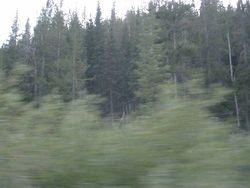 Idaho Forest