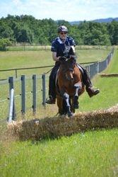 Auch ein PRE-Pferd springt