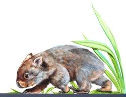 Childcare - wombat