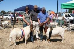 Champion & Supreme Boer Goats