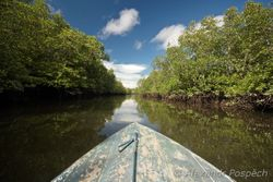 During everyday research sail in mangroves