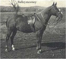Balleymooney, sire of Red Dog