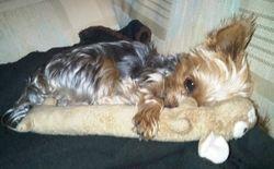 Sleepy Boy, Peanut