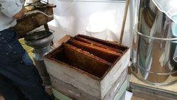 Hausse pleinne de cadres de miel