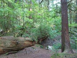 Sacred Forest 2