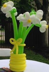 Balloon Daisies In Balloon Vase