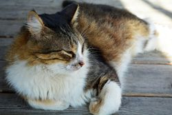 Lazy Kitty