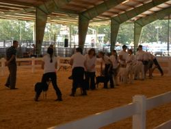 Intermediate Showmanship
