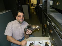 Matt Carrano, Curator of Dinosauria at Smithsonian's National Museum of Natural History