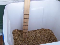 Grain in the Mash Tun