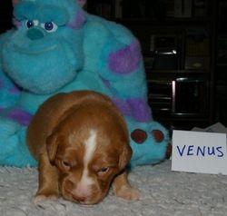Venus (burgundy girl)