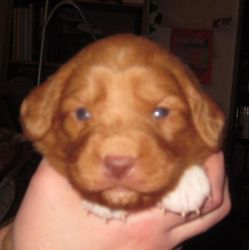 Puppy 5 - Boy