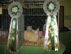 Winning Overall Best in Show Pedigree Pet