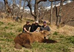 Paul Hugentobler's May 2014 bear