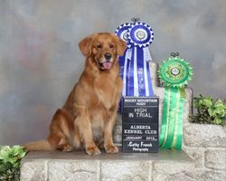 Puzzle AKC show HIT x 2 and winner of the Rocky Mountain High award