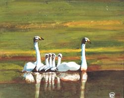 Young Swans  With Parents     B