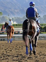 Stablemates to the Track