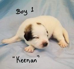"Boy 1 - ""Keenan"""