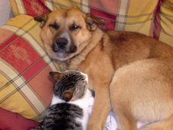 Big Dog and Jimmy the cat