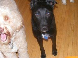 Kona and Jack