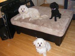 Dexter, Jasmine and Bella