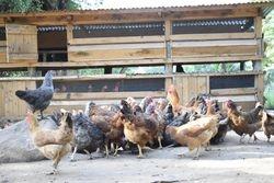 Cheptebo Farm