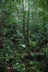 The rainforest walk