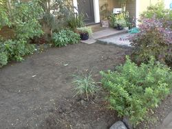 After lawn removal
