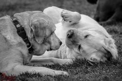 Izzy & Daisy