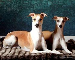 Cosmo & Selene - Portrait