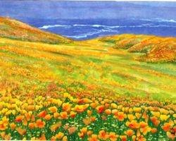 Golden Poppies Field In west Coast
