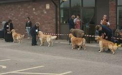 Limit Dog Line Entry