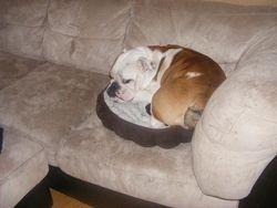 Maximus in Jasmine's bed