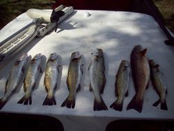 7 Trout/1 redfish all on top water lures