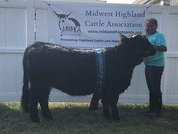 Junior Reserve Champion Breeding Heifer Almosta Farms Brinley