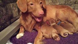 Ruse New Mom Sep 28