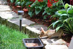 Baby bunny Visits Lindy's Gardens