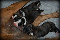 The pups @ 1 day...