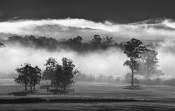 Morning Fog over Worri Yallock