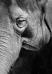 Elephant Detail 2