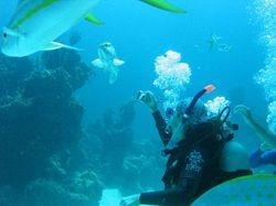 Ann taking photos of a grouper