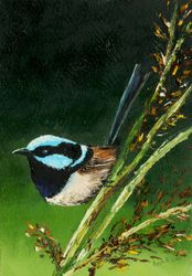 Superb Blue Fairy Wren on a Reed