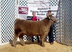 Grand Champion Steer - 2011 Young Farmer Show