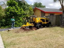 Stump Grinding Front Yard