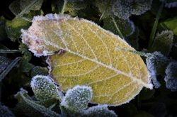 Autumn Frost 3