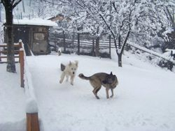 Misty and wolfy