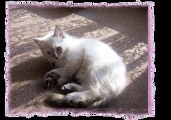 Ariella at 10 weeks
