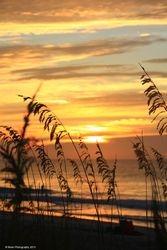Morning Sea Oats