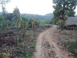 Road to Farm